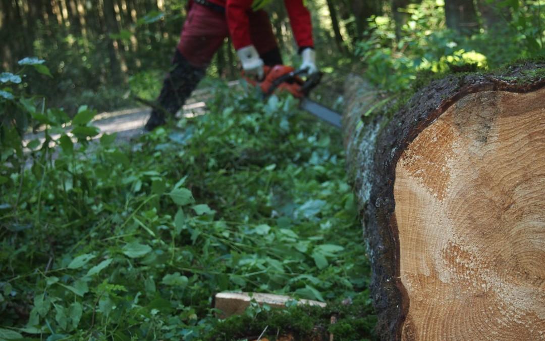 Das Holzangebot sinkt und die Holz-Preise steigen