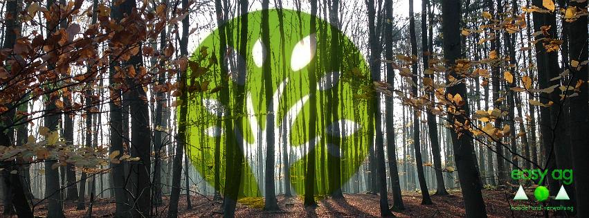 Wald bringt Geld!