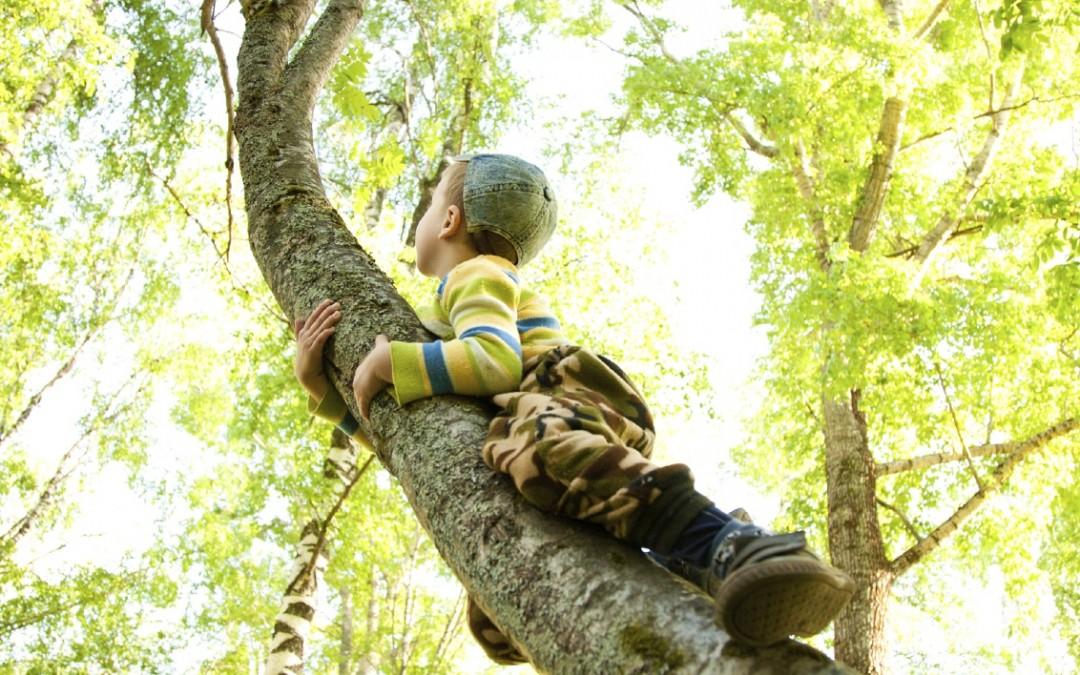 Der Wald als Immobilie – höchste Sicherheit für den Anleger